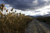 stock photo of bulrushes  - A mountain road with bulrush plants around