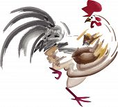 pic of fighting-rooster  - Artistic paintbrush vector illustration of a rooster on a white background - JPG
