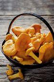 picture of chanterelle mushroom  - chanterelle mushrooms on a dark wood background - JPG