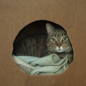 Cat Wrapped Up In Cozy Box poster