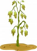 image of dead plant  - Illustration Featuring a Wilted Plant - JPG