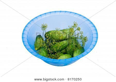 Little Green Cucumbers And  Dill In The Plastic Bowl