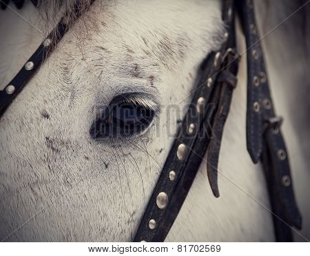 An Eye Of A White Horse.