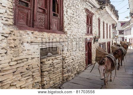 Donkey Caravan