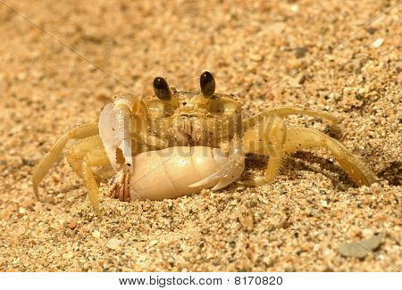 Ghost crab and hermint crab