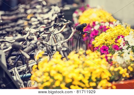 Bikes On Parking And Flowers In Amsterdam.