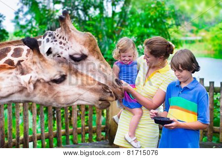 Kids Feeding Giraffe In A Zoo