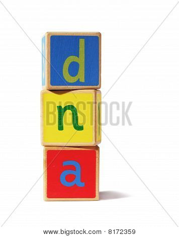 wooden blocks - dna