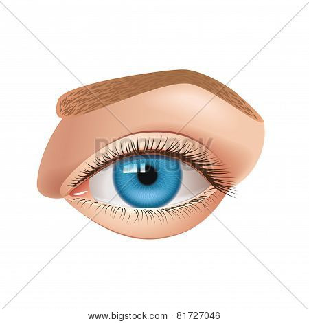 Human Eye Isolated On White Vector
