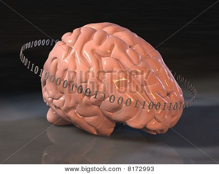 Human Brain Surrounded By Binary Code