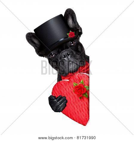 Valentines Groom Dog