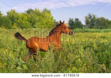 Foal run in field