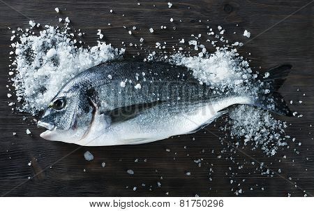 Fresh Fish Dorado On Black Board With Salt