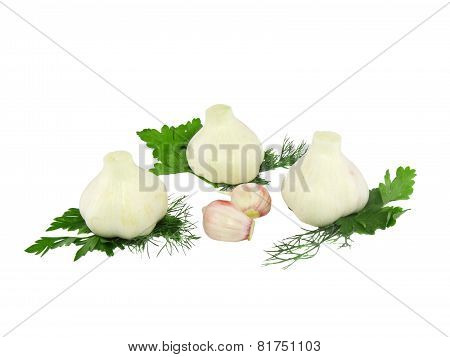 Garlic, Decorating Of Parsley. Isolated