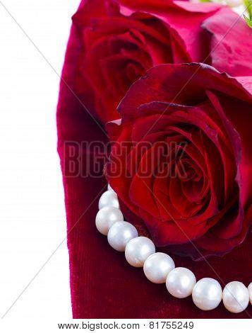 red roses on velvet