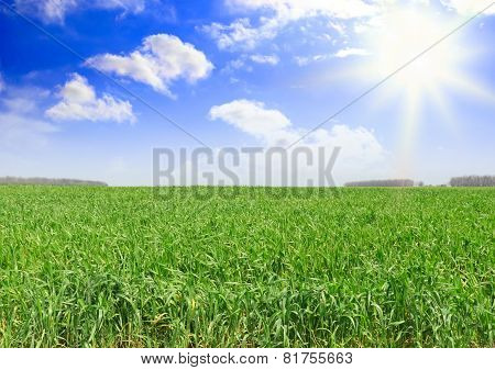 Green Grass, The Blue Sky And White Clouds