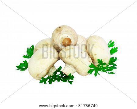 Mushroom Champignon .isolated