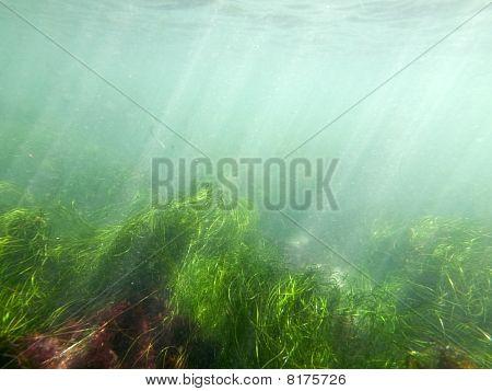 Murky Sea