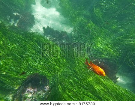 La Jolla Underwater