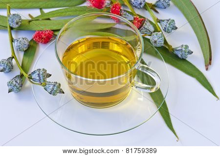 Eucalyptus Herbal Tea.
