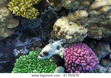 Coral  In The Red Sea.