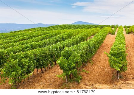 Diminishing Rows Of Vineyard Field In Southern France