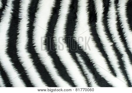 Black And White Fur Zebra Pattern.