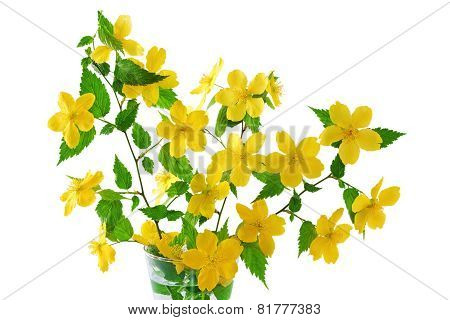 Bouquet Kerria  Japonica     Yellow Wildflowers In Vase  .