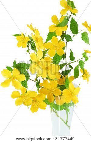 Bouquet Marsh Marigold  Yellow Wildflowers In Vase  .