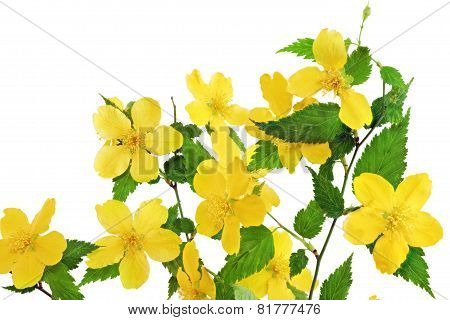 Bouquet Marsh Marigold  Yellow Wildflowers In Vase  .