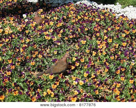 Ramat Gan Park Turtledoves