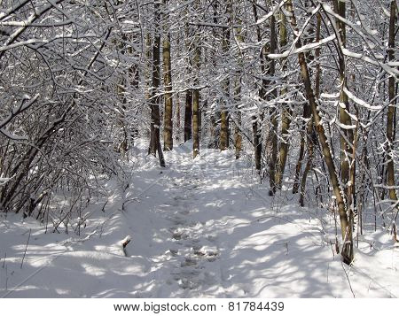 path in the winter forest
