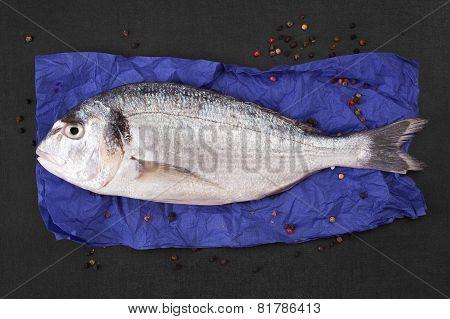 Fresh Sea Bream Fish.