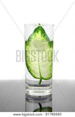 Ecology -green Leaf In Glass Of Water.