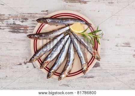 Fresh Sardines On Plate.