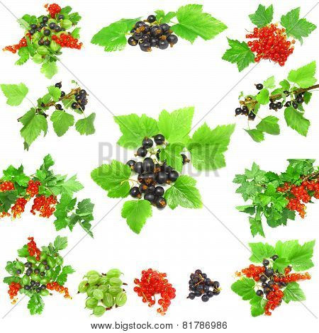 Collage Of Berrys On White Background. Isolated