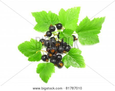 Black Currant With Leaf On White .isolated.
