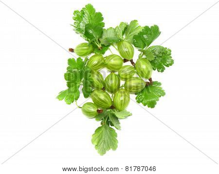 Ripe Gooseberry On Branch. Isolated.