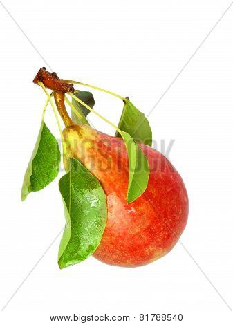Single Pear With Stem And Green Leaf. Isolated.