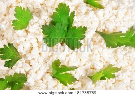 Fresh Cottage Cheese (curd) Heap With Parsley, Isolated On White Background .