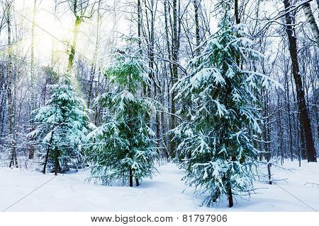 Silent snow-covered park.