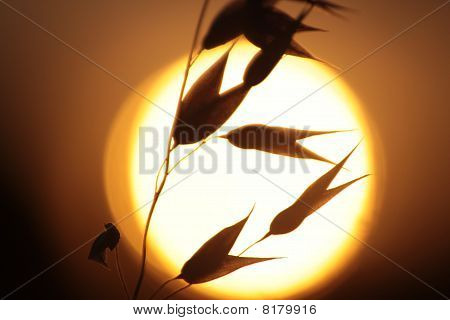 Backlit Grasses