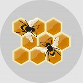 pic of honeycomb  - Honeycomb with bees - JPG