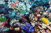 picture of shoal fish  - Coral and fish in the Red Sea. Egypt Africa ** Note: Soft Focus at 100%, best at smaller sizes - JPG