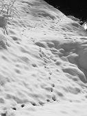 stock photo of animal footprint  - black and white photo of animal footprints in the snow - JPG