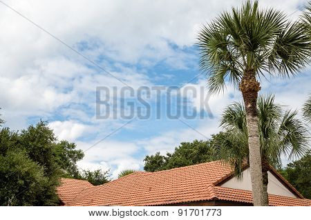 Tile Roof Under Tropical Trees