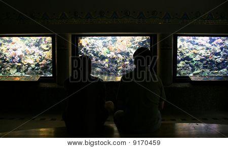 Aquariums Hall