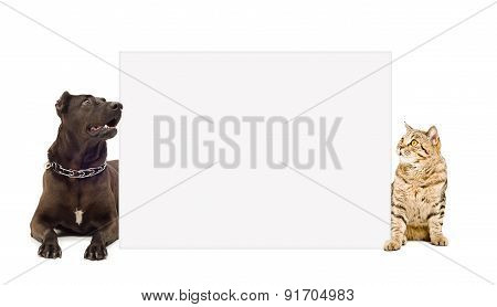 Dog and cat peeking from behind banner