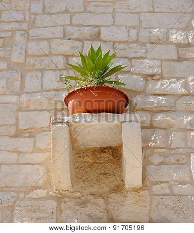pot plant decorated