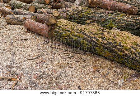 Pile of lumbers